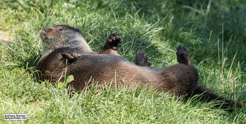 Where the grass is green and the otters are pretty