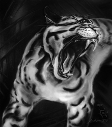 Clouded Leopard Cyclops