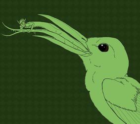 Hummingbird Nom Sketch