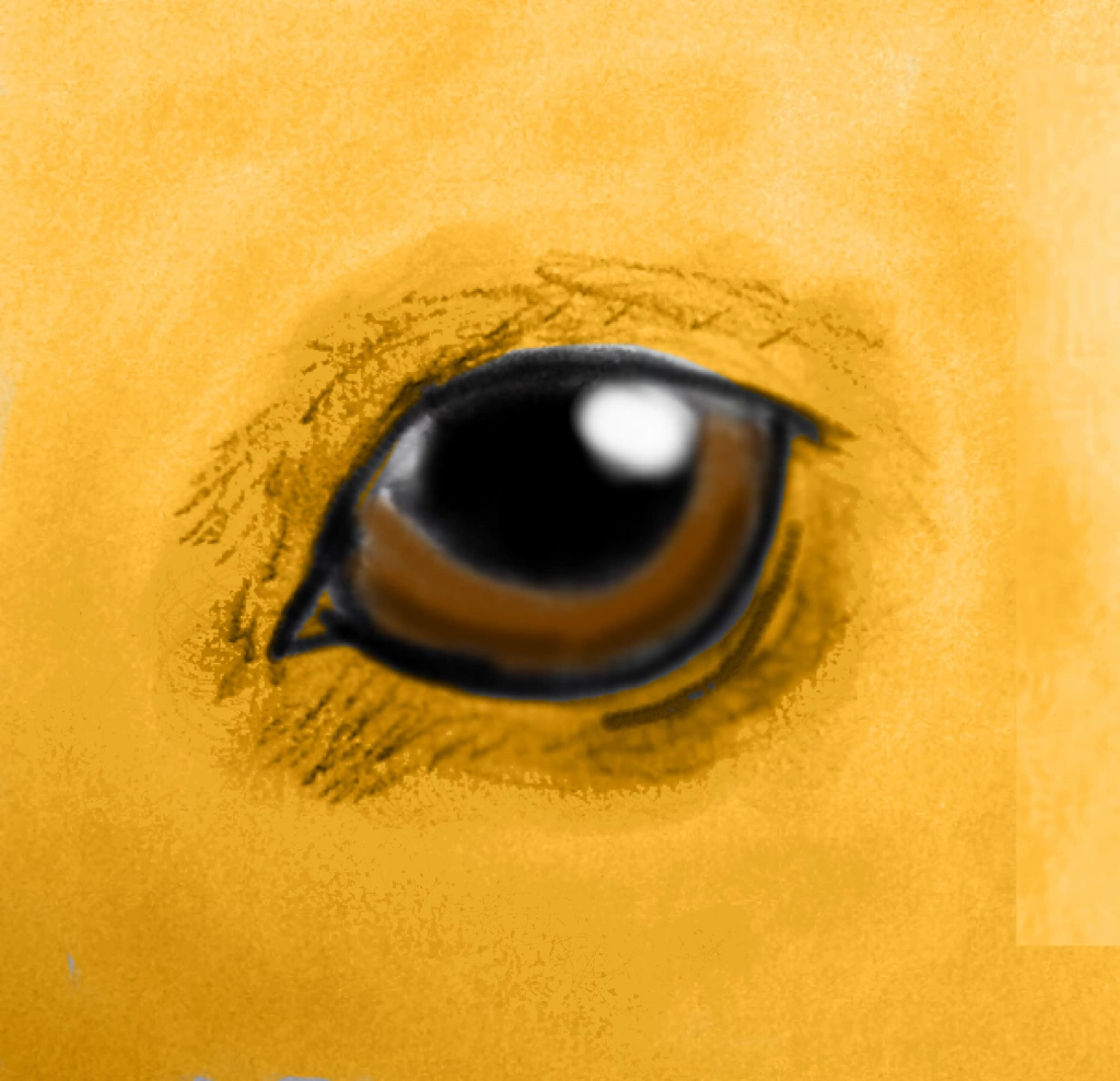 Realistic canine eye attempt