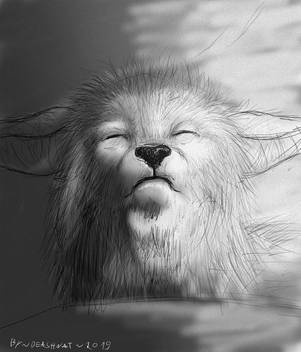Croquis Fox