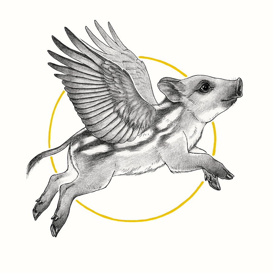 Most recent image: Little flying boar
