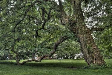 Blitzförmiger Baum