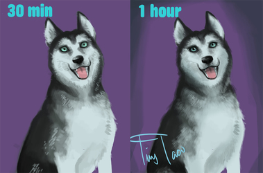 Speed Paint: Husky difference