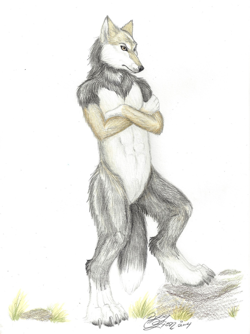 Commission Wolf