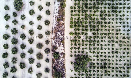 plantations from above