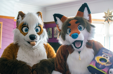 Perky Foxes