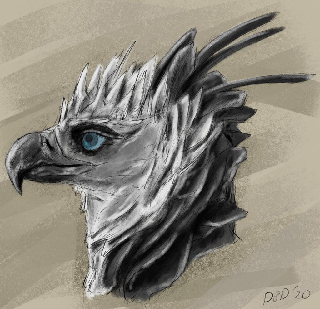 066 Harpy_Eagle_Bust
