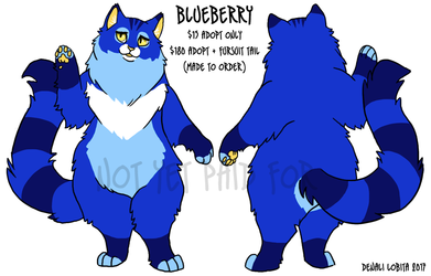 SOLD! Blueberry - Longhair Cat Adopt