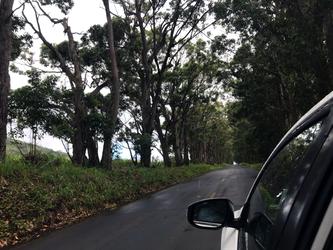 Hawaiian Tree Tunnel