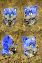 Blue Fox head
