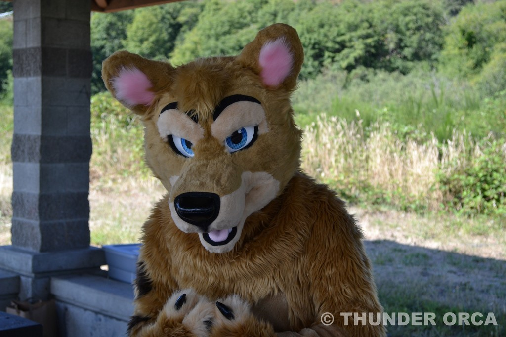 RainFurrest BBQ 2016 (Part 28)