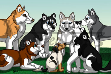 Husky Pack Group