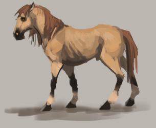 Toko Horse