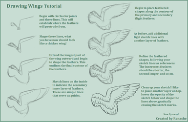 Drawing Feathered Wings Tutorial