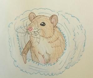 Adorable baby rat