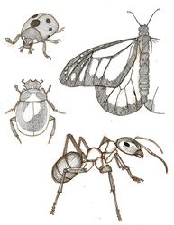 Homework - 4 Insects
