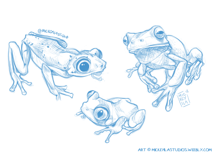 Stream Warmup - Froggies