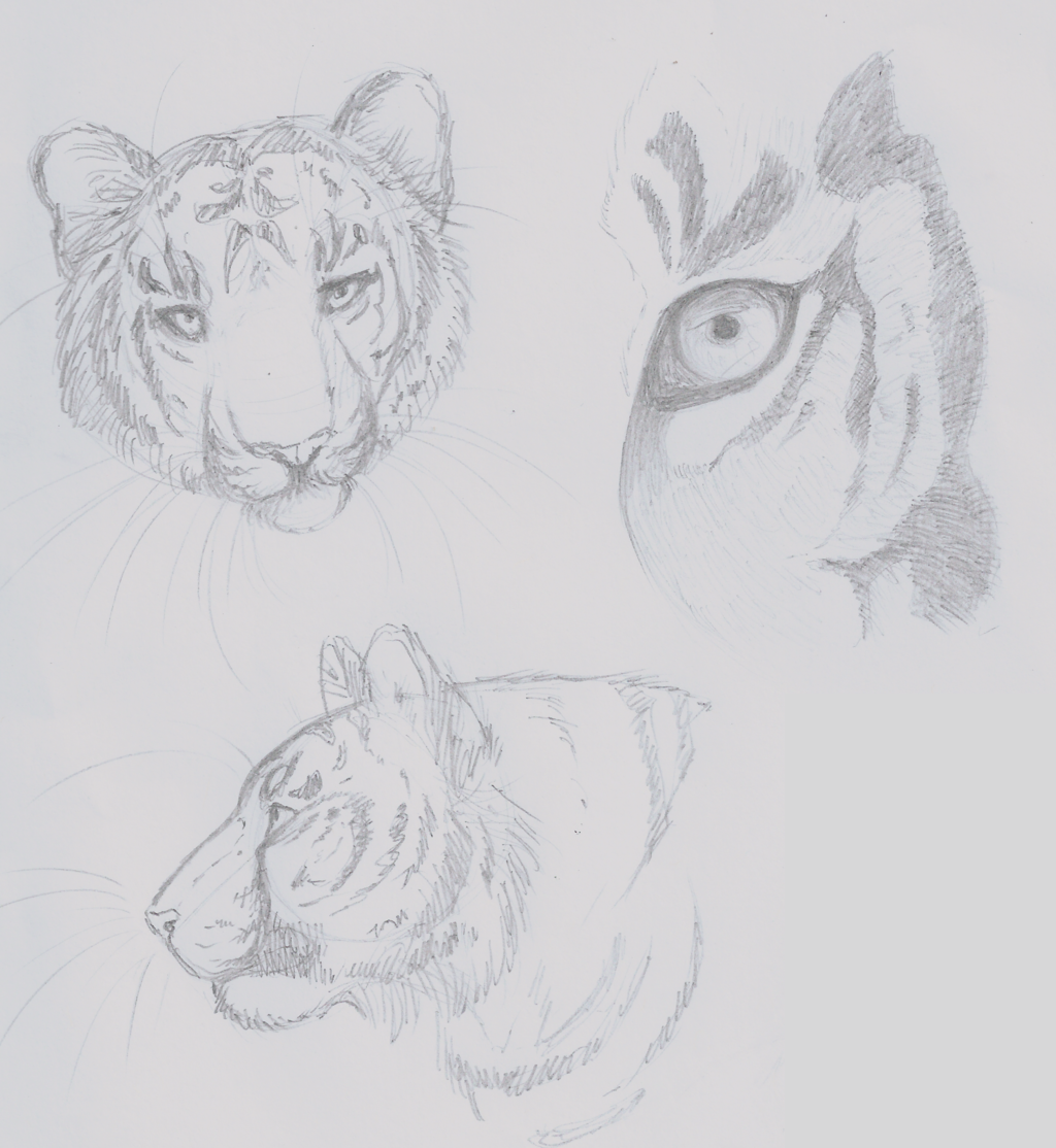 Daily Doodles-9/14/2015