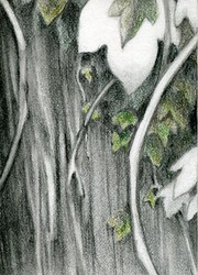 Wood & Ivy :ACEO: