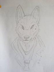 Wolf croquis