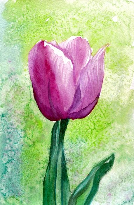 WC 10: Tulip