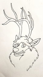 Big antlers for fighting off the boys