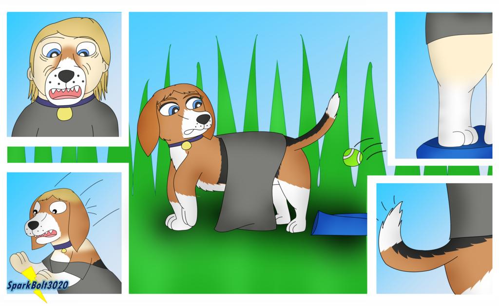 Beagle Park - Dog TF TG