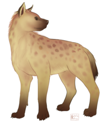 Spotted Hyena