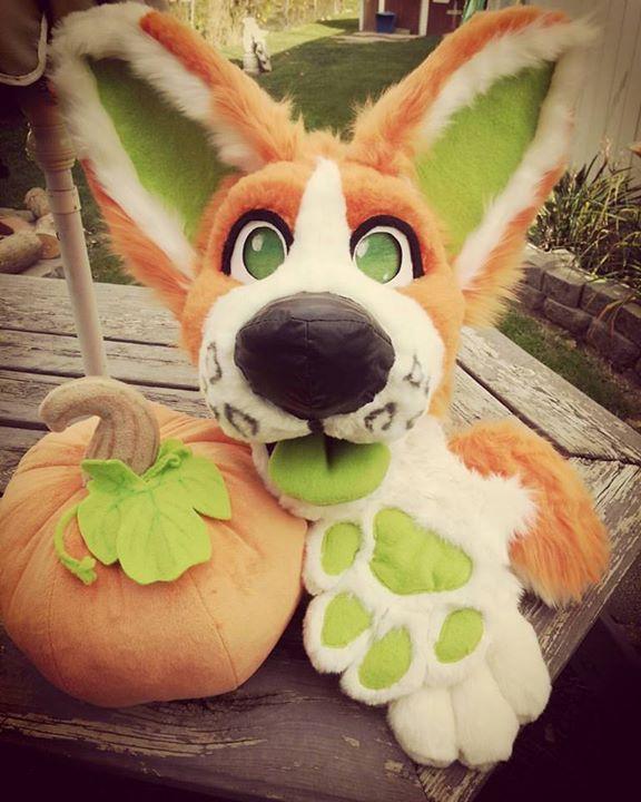 Pumpkin Corgi Partial
