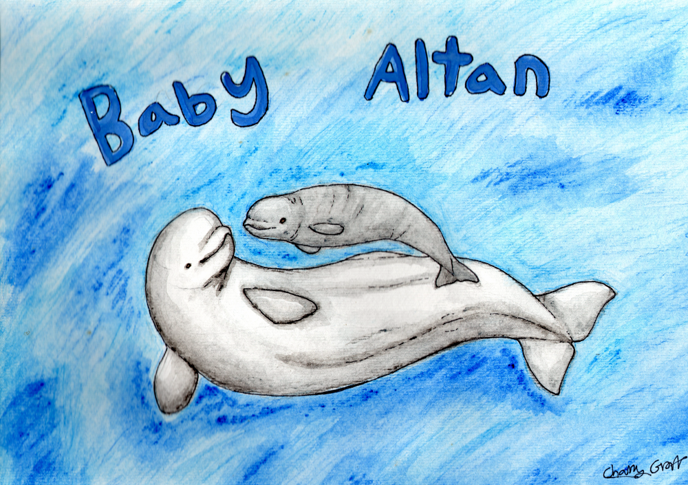 Baby Altan