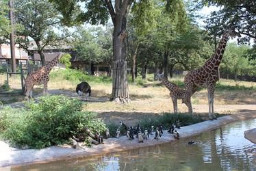 Omaha Zoo Animals