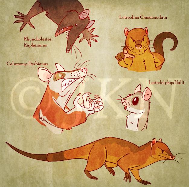 Playful Possums