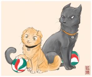 KageHina Kitties