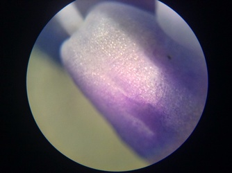 Science class - Microscope on a flower