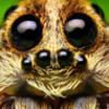 avatar of Ferabird