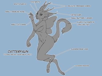 Catterfaun Information