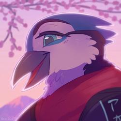 Sakura Sunset