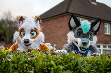 Hedge Guardians
