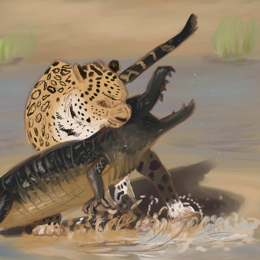Jaguar attacking cayman