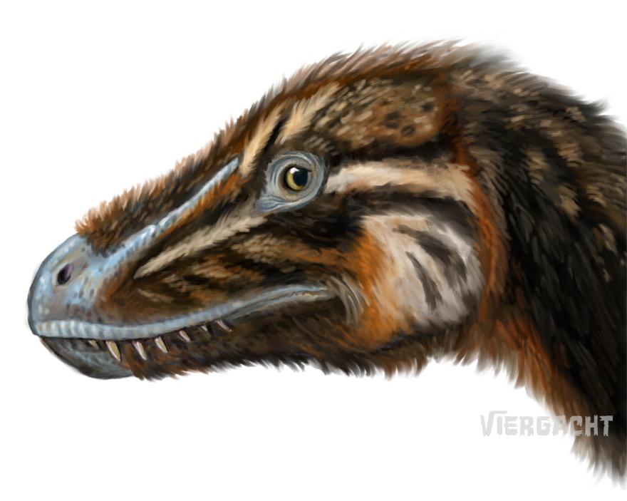 Dinovember Tyrannosaurus juvenile