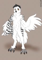 CS OwlClaw01