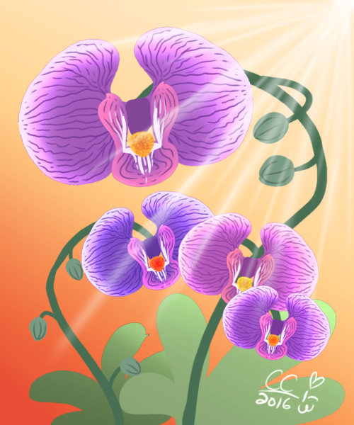 Purple Orchids of Passion