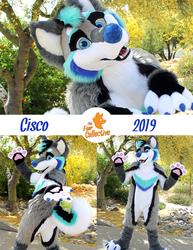 Cisco the Husky!