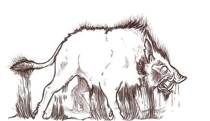 Hell boar