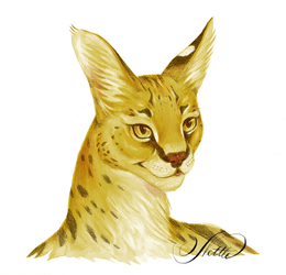 Lady Serval