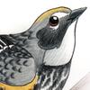 avatar of Talonzi