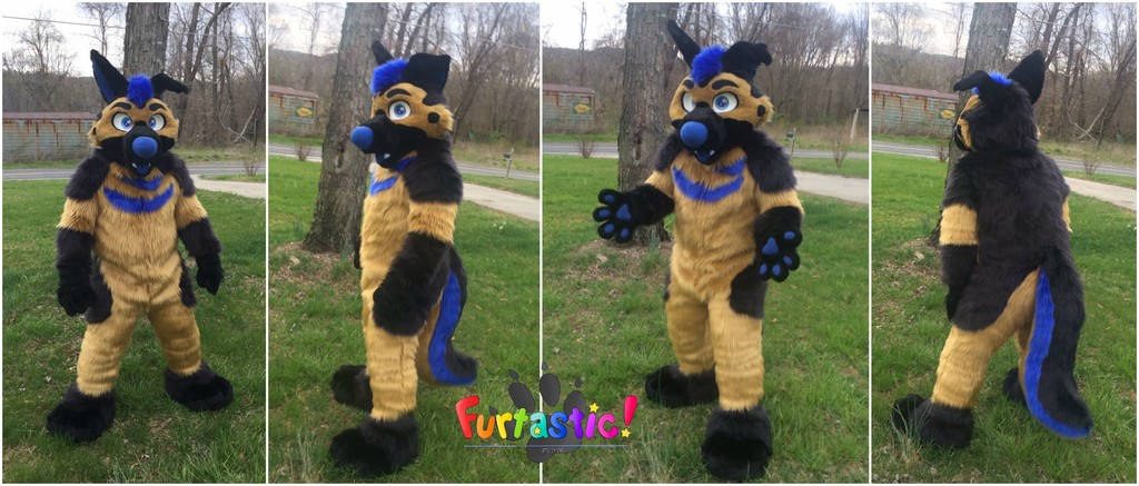 Most recent image: Levi GSD Fullsuit