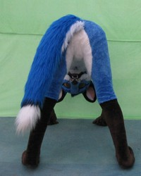 Blue Fox tacking nsilly