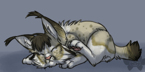 Ksi is a kitty
